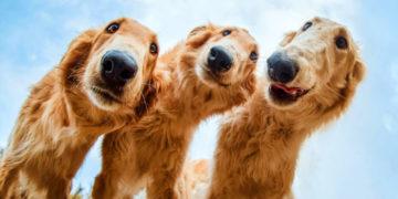 fayyakpechrnoglshdshhzh 700x366 360x180 - 30 ярких снимков, которые стали лучшими на конкурсе собачьих фотографий 2019 года
