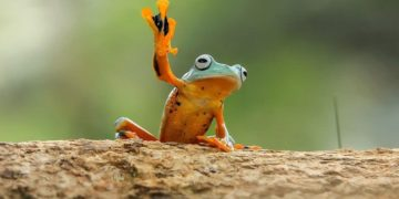 frog photography tantoyensen 9 5836fb70c9b54  880 360x180 - ТОП-10 великолепных фотографий лягушек, какими вы их ещё никогда не видели