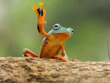 frog photography tantoyensen 9 5836fb70c9b54  880 360x270 - ТОП-10 великолепных фотографий лягушек, какими вы их ещё никогда не видели