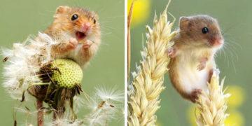 fvayavy 700x366 360x180 - Британец настолько круто фотографирует мышей, что их полюбят даже те, кто всегда боялся