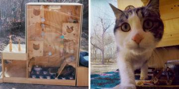 preavkaaaaaaa 700x366 360x180 - Инженер из Пекина построил кошачий приют, в котором работают не люди, а искусственный интеллект