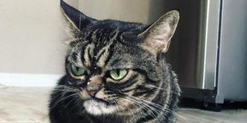 pvara 700x366 360x180 - Угрюмая кошка стала новым мемом, который показывает вселенскую ненависть к понедельникам