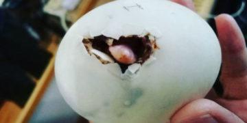 vrpavrpara 700x366 360x180 - Женщина выкупила в ресторане яйцо и высидела пернатого друга, с которым теперь живёт душа в душу
