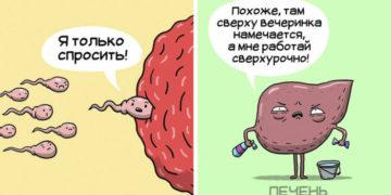 vyfayfva 700x366 360x180 - 10 забавных комиксов о нелёгкой, но весёлой жизни внутренних органов человека