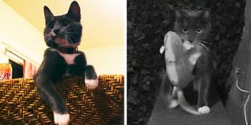 wefzsrgxdthfcyjgvukhbiljnokpml 700x366 360x180 - Кот приносил хозяину добычу, а тот был против. От кровавых даров спасли смекалочка и технологии