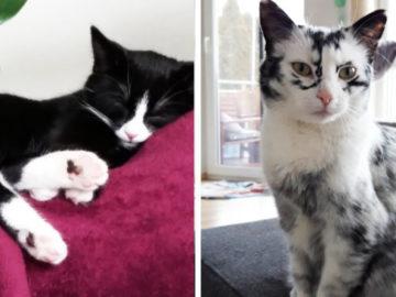 wertyukihlol 700x366 360x270 - Немка нашла двух чёрно-белых кошек и взяла их себе. Но через пару месяцев одна из них начала белеть