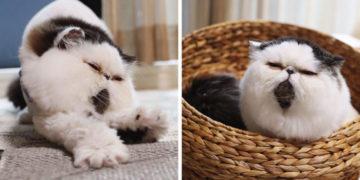 yvayvayva 700x366 360x180 - Природа наградила этого кота окрасом, который выглядит, словно он принарядился и надел галстук