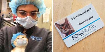 zdfdgfjhgvkhblj 700x366 360x180 - 15 котов и кошек, которые не сидели сложив лапки, а нашли себе работу