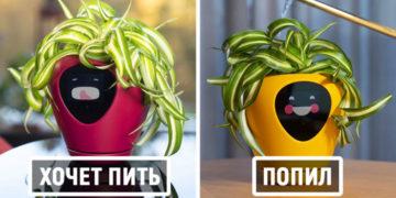 14 8 700x366 360x180 - Этот умный цветочный горшок превратит ваши растения в тамагочи. Теперь убить их будет не так просто