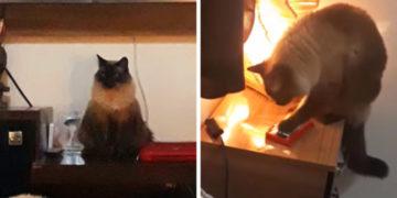 1564580537 a87ff679a2f3e71d9181a67b7542122c 700x366 360x180 - Бразильянки постоянно просыпали работу, потому что их котик умеет пользоваться айфоном