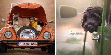 1565015984 05f0592c7a2f8eb17b487ce1366d81e8 700x366 360x180 - Фотограф из Бельгии снимает собак и винтажные автомобили. Получается очень органично!