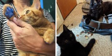1565082964 6ffaf30f190fcea89b4e2df912e2a5a9 700x366 360x180 - 16 фотографий котов, которым намурчать на человеческие правила и порядки