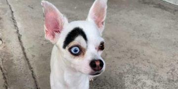 1565270031 a87ff679a2f3e71d9181a67b7542122c 700x366 360x180 - В Таиланде обнаружили пса, который выглядит как 2 собаки в 1. Люди думали, фотошоп, но нет — природа