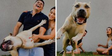 1565334383 eccbc87e4b5ce2fe28308fd9f2a7baf3 700x366 360x180 - «Он спокойный и будет вести себя хорошо»: Пара взяла пса на предсвадебную фотосессию и не прогадала