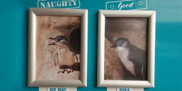 1566207868 df911f0151f9ef021d410b4be5060972 700x366 360x180 - В этом океанариуме пингвины ежемесячно попадают на доску почёта, совершая глупые и милые поступки