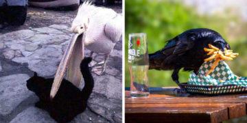 1566810472 6585453710102770aa7287853849647d 700x366 360x180 - 20 наглых птиц, которые ведут себя отвратительно и совсем не раскаиваются