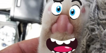 1567178978 b0fe8b91546e4b78b6bb96a5910af24f 700x366 360x180 - Пикабушник обнаружил, что у котов на лапках человеческие носы. И да, там действительно носы!