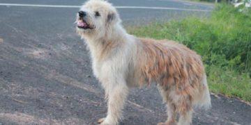 446726 size2 360x180 - Потерявшаяся собака четыре года дожидалась хозяев в Таиланде
