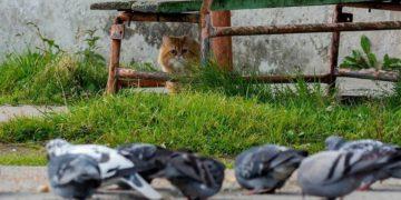 BarsikTheCat09 360x180 - Драматичная история кота Барсика, который не смог