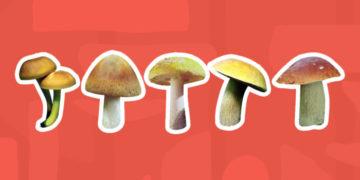 mushrooms 700x366 360x180 - Тест: Сможете ли вы правильно определить, какие грибы съедобные, а какие — нет?