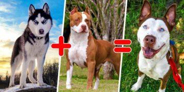 preview 15128332 1200x630 99 1568649109 800x420 360x180 - 25 самых необычных пород собак, полученных в результате скрещивания