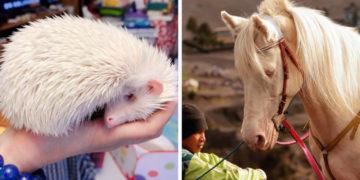 1572352219 ada5ed8cf70f56f0d0b5e3602462ef4e 700x366 360x180 - 15 животных-альбиносов, которые удивляют и очаровывают своей уникальной внешностью