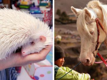 1572352219 ada5ed8cf70f56f0d0b5e3602462ef4e 700x366 360x270 - 15 животных-альбиносов, которые удивляют и очаровывают своей уникальной внешностью