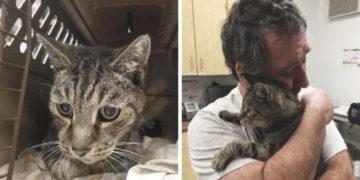 360x180 - Мужчина год безуспешно искал своего кота. Они встретились через 7 лет, и слёз вам будет не сдержать