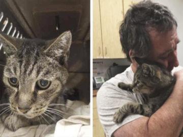 360x270 - Мужчина год безуспешно искал своего кота. Они встретились через 7 лет, и слёз вам будет не сдержать