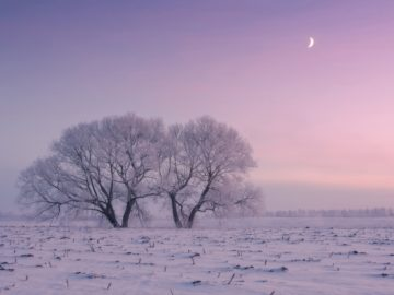winterbeauty05 360x270 - Фотограф ежедневно встает рано утром, чтобы запечатлеть красоту зимы