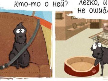 1 187 685x1024 360x270 - Комикс о том, как меняется ваша жизнь, если взять собаку из приюта