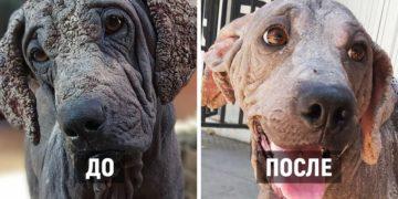 1580392728 5aeec3d5d4044b0cc03b4d40ccf1818f 360x180 - Чилиец выхаживает бездомных собак и показывает, какие красавчики скрывались за худобой и болячками
