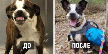 1581085362 eccbc87e4b5ce2fe28308fd9f2a7baf3 360x180 - 15 фотографий собак до и после того, как новые хозяева смогли их приютить и согреть своей любовью