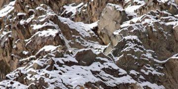 16 360x180 - На фото есть снежные барсы, но лишь 10% людей могут сразу найти их