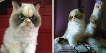 578578578 360x180 - У этой кошки мордаха жуткой злюки. Её фотки — триумф котопрезрения!