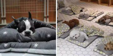 huo2hjrqtszcf9z203z1 360x180 - Как выглядит тихий час в детском саду для собак? Фото спящих щенков в кроватках поразили весь мир