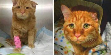 mycollages 33 1300x675 360x180 - «Вот так красавцы»: как изменились котята, которых когда-то приютили люди. Фотоподборка