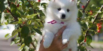 sm sm.jpg 1 360x180 - Женщина купила в зоомагазине щенка, но это оказалась вовсе не собака: кого продали посетительнице зоомагазина