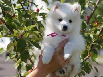 sm sm.jpg 1 360x270 - Женщина купила в зоомагазине щенка, но это оказалась вовсе не собака: кого продали посетительнице зоомагазина